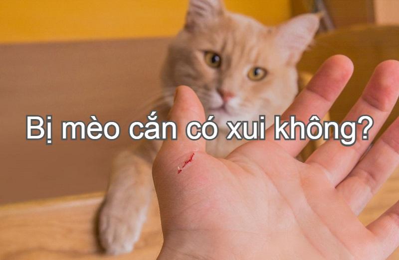 Bị mèo cắn có xui không? Bị mèo cắn có sao không, là điềm gì?