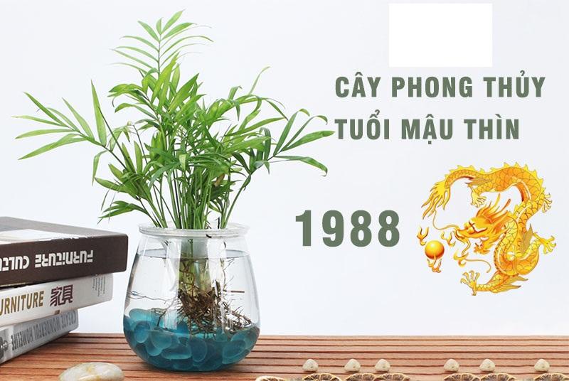 Top cây phong thủy tuổi Thìn giúp thay đổi vận mệnh đời bạn. Tuổi Thìn nên trồng những loại cây phong thủy nào tốt?