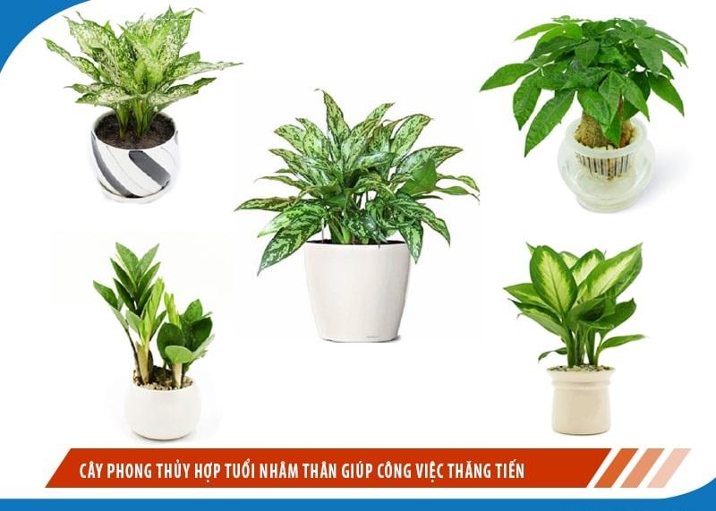 Tuổi Bính Thân nên trồng cây gì trong nhà tốt hợp phong thủy?