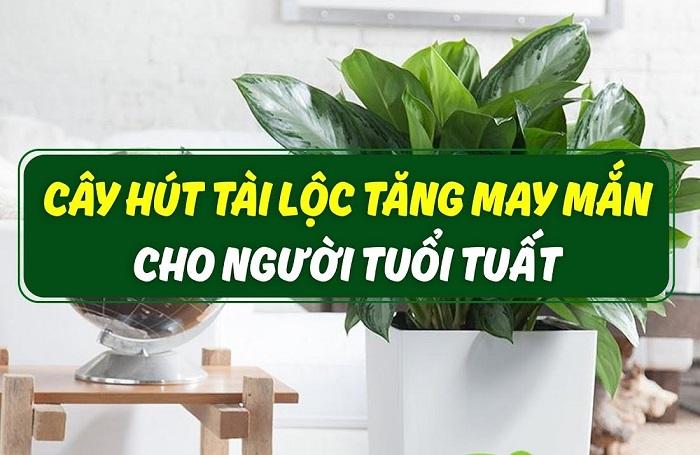 Muốn làm ăn Phất Phần Phật trồng ngay cây phong thủy tuổi Tuất. Tuổi Tuất nên trồng cây gì hợp phong thủy? Cây hợp tuổi Tuất