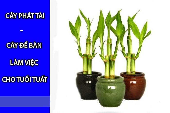 Tuổi Nhâm Tuất nên trồng cây gì hợp phong thủy?