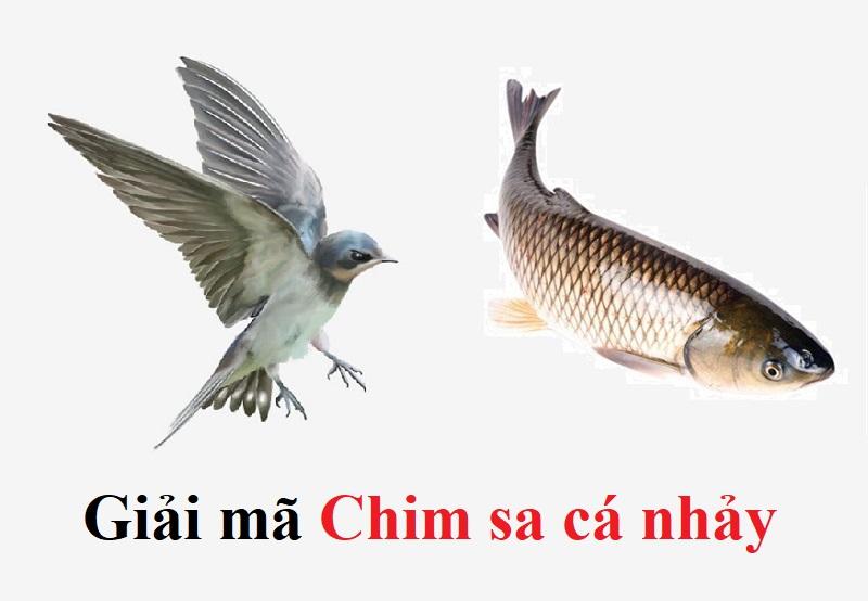 Chim sa cá nhảy báo điềm gì? Chim sa cá nhảy là hiện tượng gì?