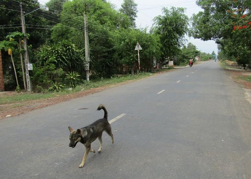 Đi xe đâm vào chó là điềm gì. đi xem đâm vào chó đánh con gì?