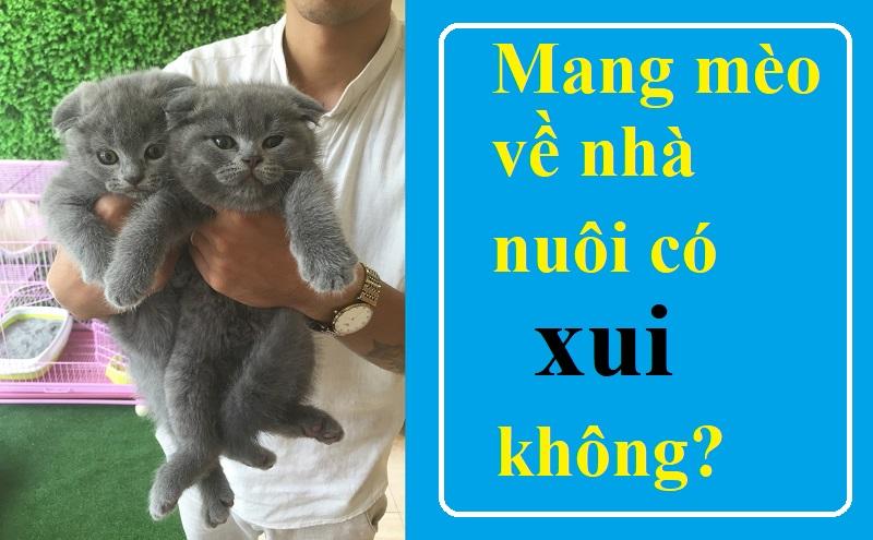 Mang mèo về nhà nuôi có xui không, hay là hên? Thực hư chuyện đen đủi khi mang mèo về nhà nuôi