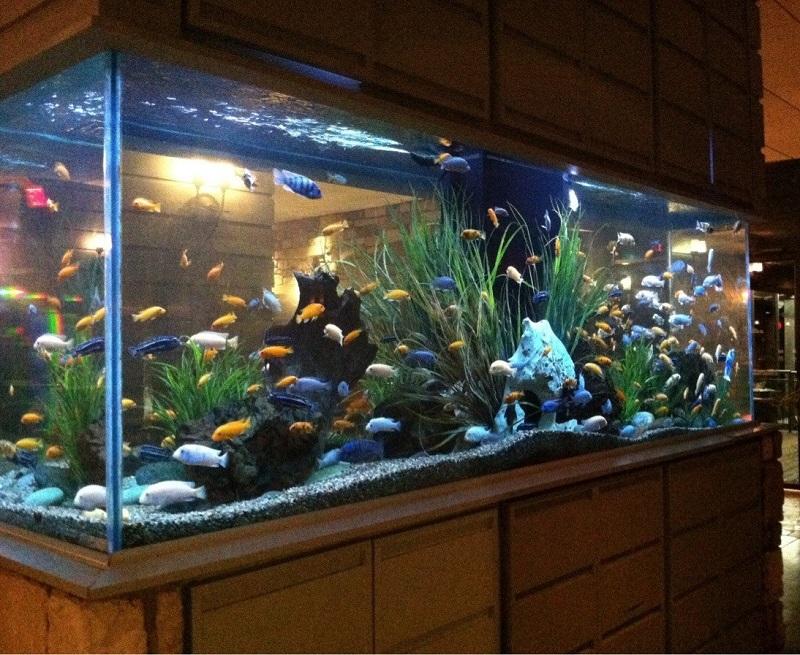 Mệnh Mộc hợp nuôi cá cảnh gì? Những loài cá hợp mệnh Mộ