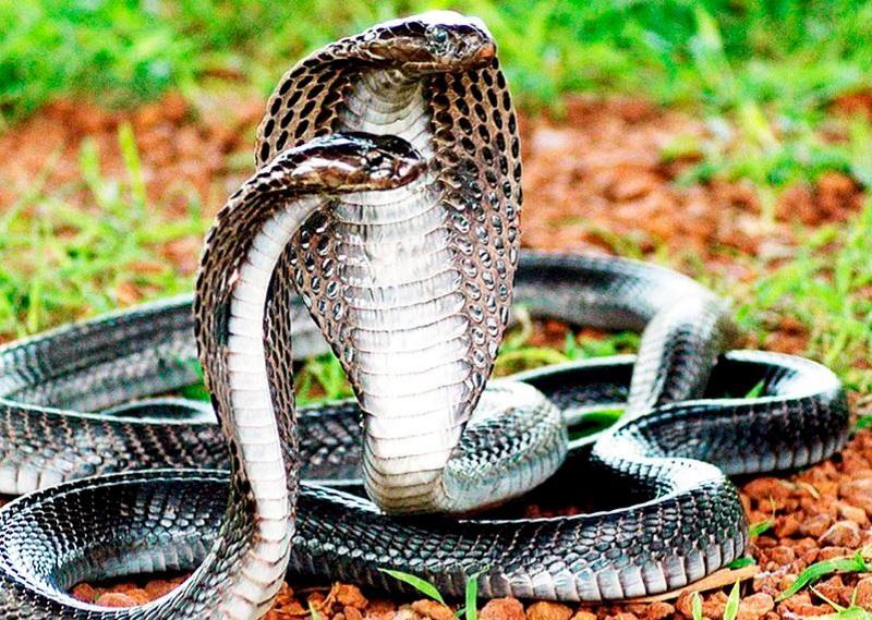 Mơ thấy bắt rắn là điềm gì?