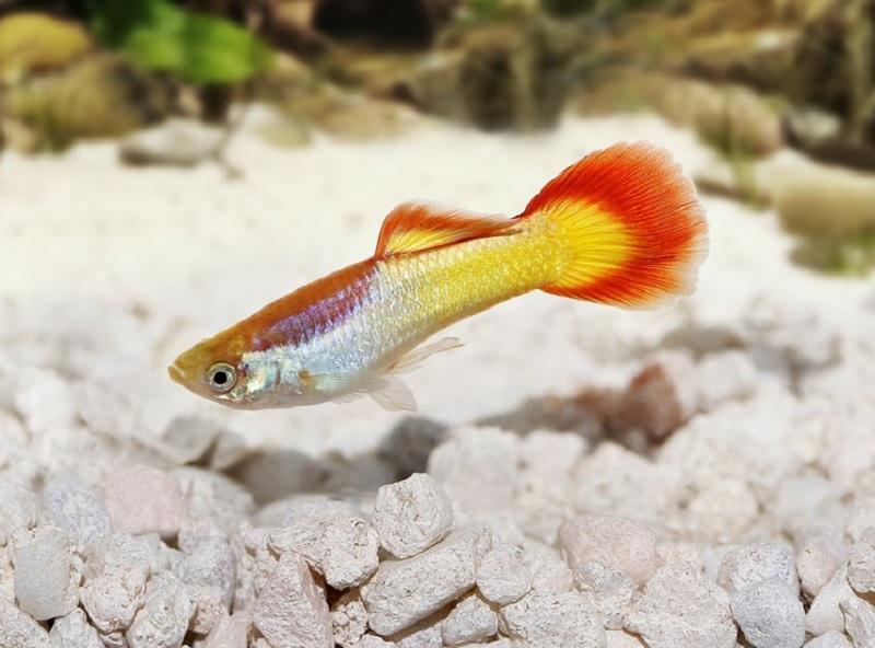 Mơ thấy cá nhảy lên khỏi mặt nước. Cá nhảy lên mặt nước