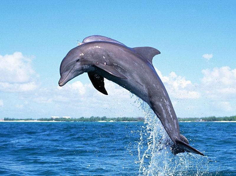 Mơ thấy cá nhảy lên khỏi mặt nước. Cá biển nhảy lên mặt nước