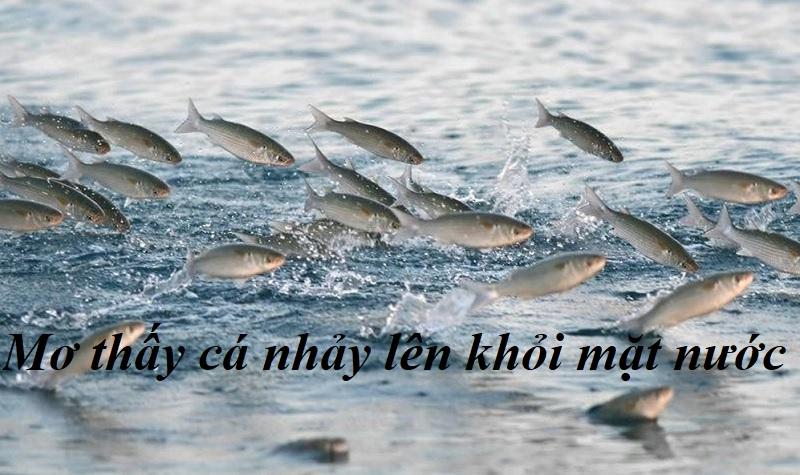 Mơ thấy cá nhảy lên khỏi mặt nước. Thấy cá chép nhảy lên mặt nước là điềm gì?