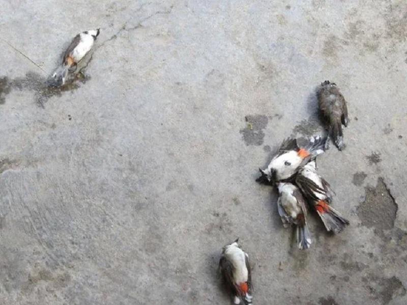 Mơ thấy chim chết là điềm gì? Mơ thấy chim chết đánh con gì?