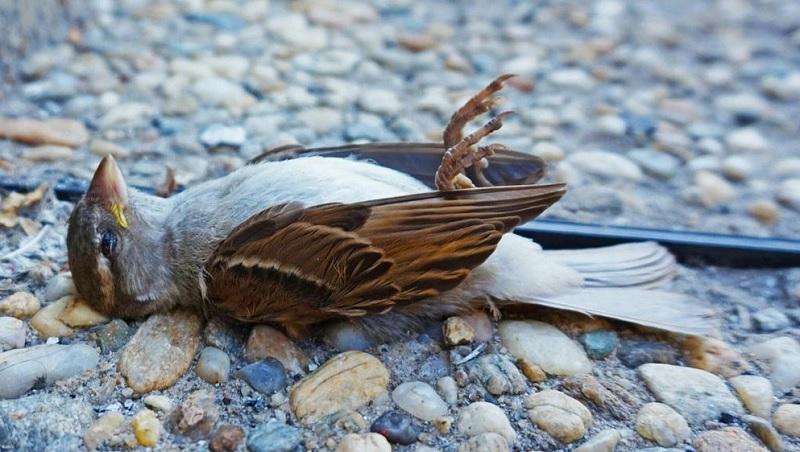 Mơ thấy chim chết là điềm gì? Mơ thấy bắn chim chết