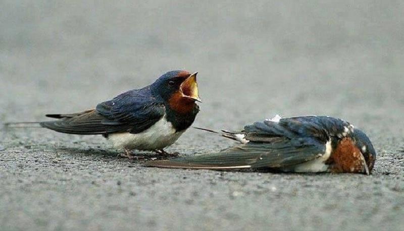 Mơ thấy chim chết là điềm gì? Mơ chim chết có điềm gì không?