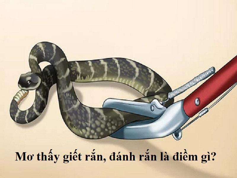 Mơ thấy giết rắn, đánh rắn là điềm gì?
