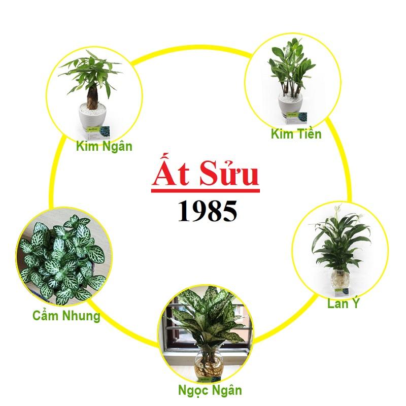 Sinh năm 1985 trồng cây gì?