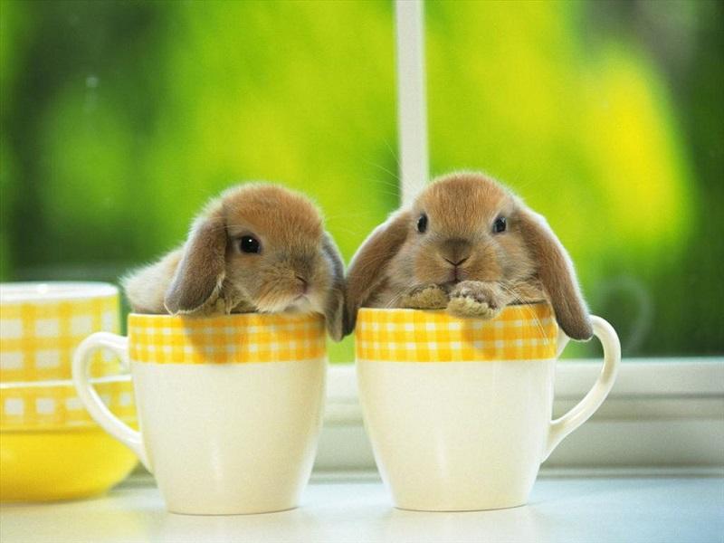 Nằm mơ thấy thỏ là là điềm gì, đánh con gì?