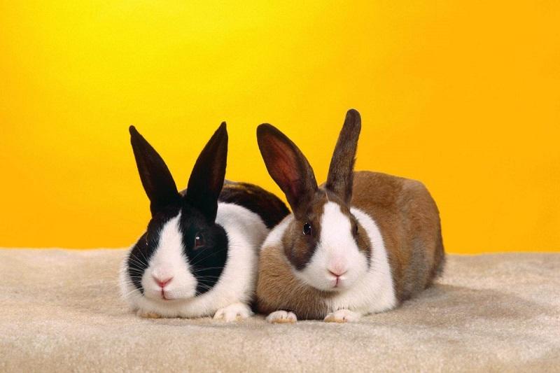 Nên đánh con gì khi nằm mơ thấy thỏ?