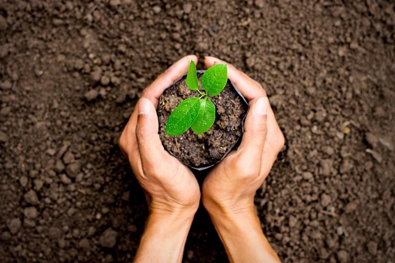 Nên đánh con gì khi mơ thấy mình đang trồng cây?