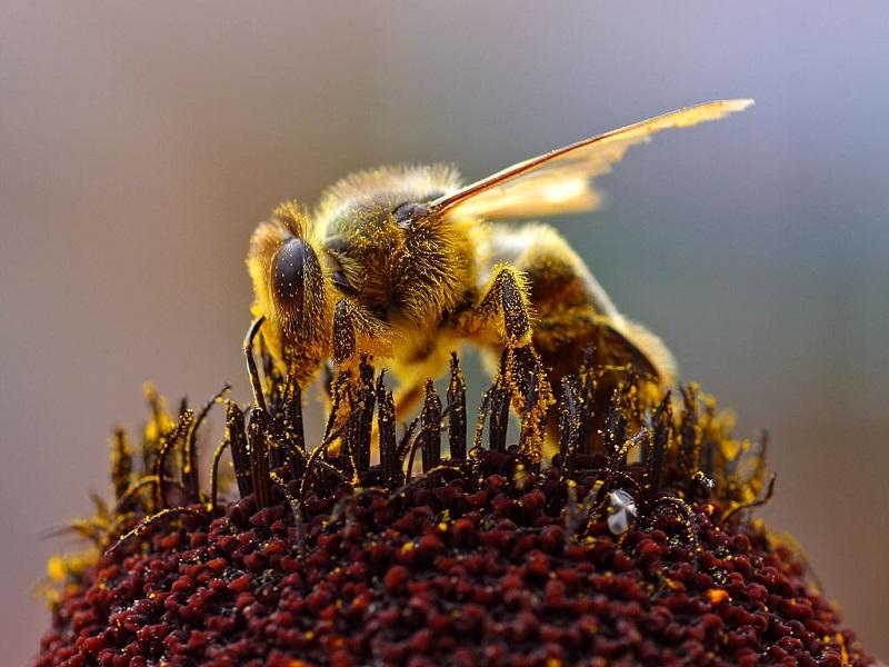 Ong làm tổ trong nhà là điềm gì?