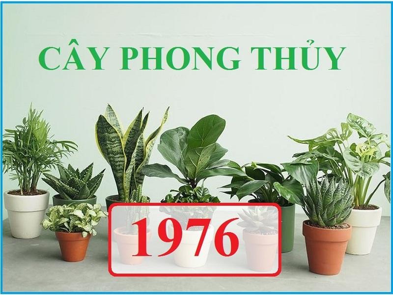 Sinh năm 1976 hợp cây phong thủy gì?