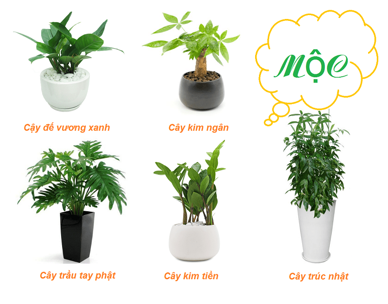 Mệnh Tang Đố Mộc hợp trồng cây gì?