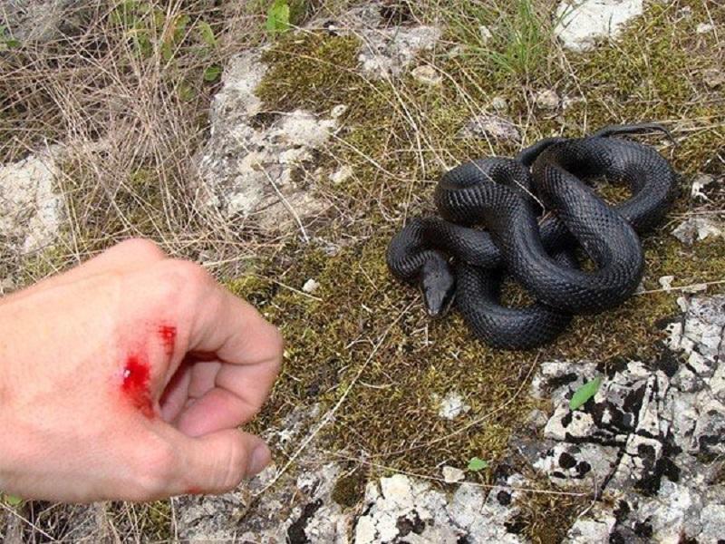 Mơ bị rắn cắn là điềm gì?