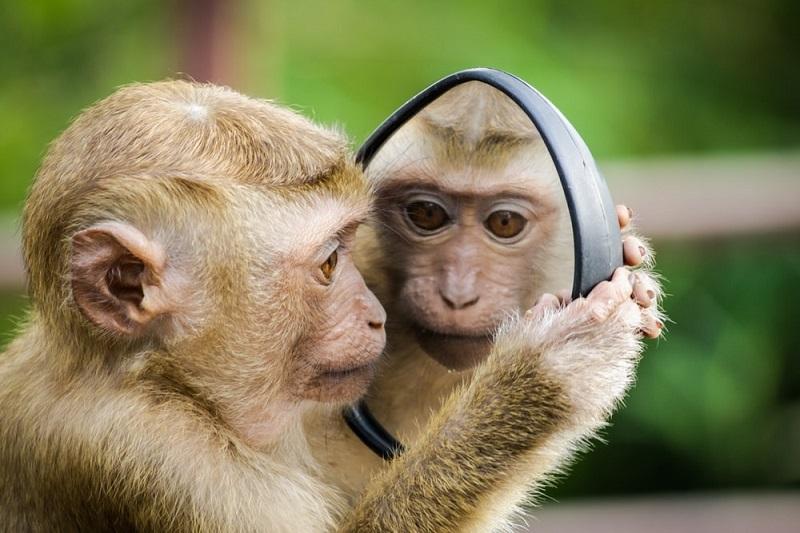 Nằm mơ thấy khỉ đánh con gì?