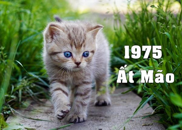 Năm 1975 tuổi gì? Sinh năm 1975 là tuổi con Mèo