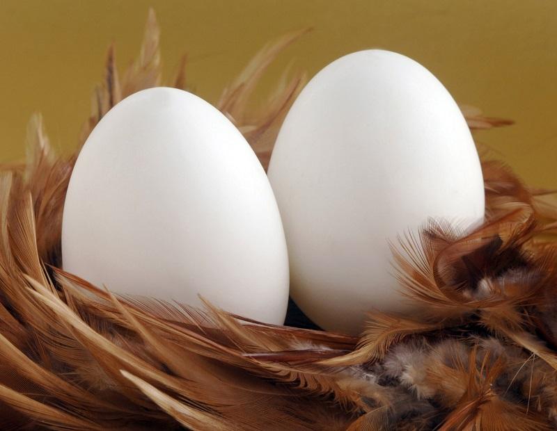 Mơ thấy trứng ngỗng nên đánh con gì?